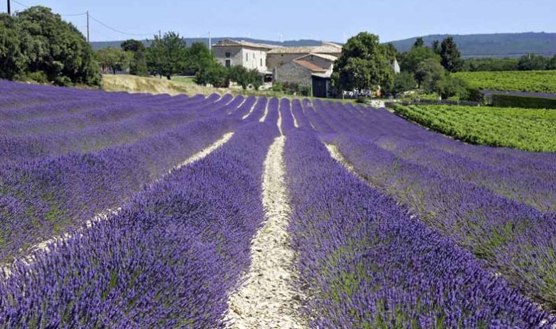 Duft und Farben der Provence