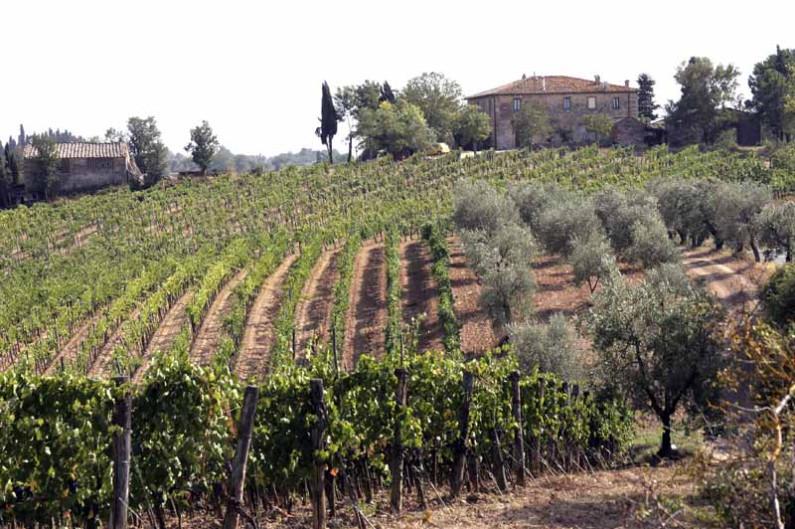 Toskana: Zypressen und sanfte Hügel
